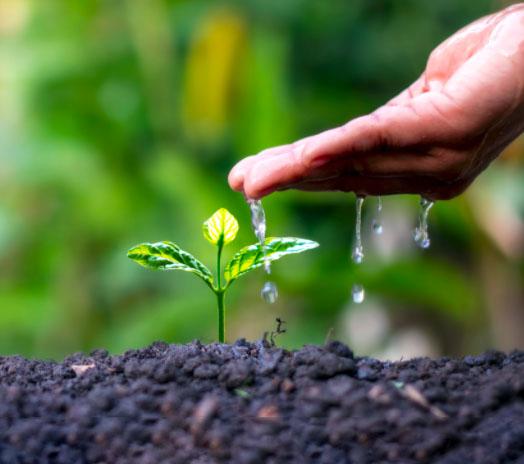 Environmental Policy EN